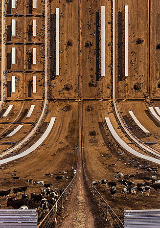 Photography of a cow farm in an unusual perspective